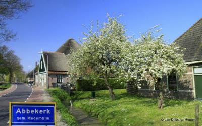 De vruchtbomen in bloei in Abbekerk.