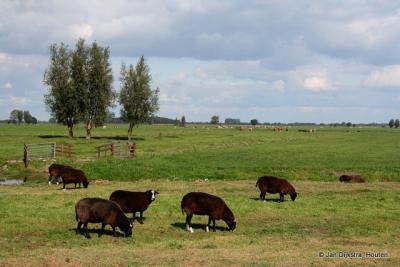 Het landschap van de Alblasserwaard bij Bleskensgraaf