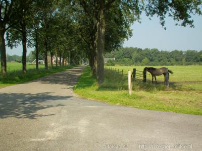 Boerlaan, buurtschapsgezicht