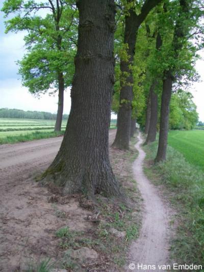 Corle (buurtschap van Winterswijk), de zandweg Kornburgerveenweg loopt Z van de natuurgebieden Korenburgerveen en Corlese Veen.