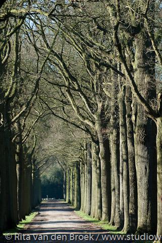 Wouwse Plantage, bomenlaan over het landgoed