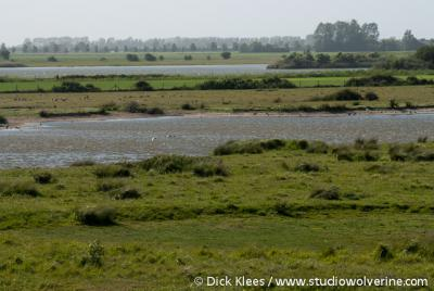 Sirjansland, natuurgebied Dijkwater