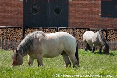 Noordwelle, het dorp kent nog paardenkracht