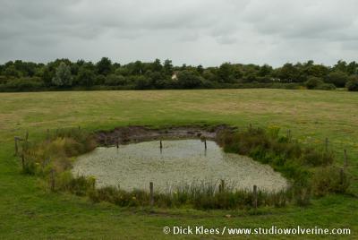 Vrouwenpolder, deze aangelegde amfibieënpoel komt de biodiversiteit (de diversiteit van planten en dieren) in het gebied ten goede.