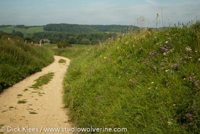 Holle weg met bloemrijke berm, afdalend naar Cartils