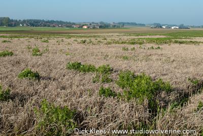 Jabeek, in de omgeving van het dorp zijn akkers voor de instandhouding van de wilde hamster of korenwolf aangelegd