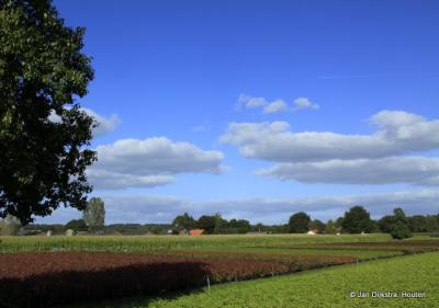 Aan de Broekweg in Darthuizen zien we aan beide zijden uitgestrekte kweekvelden met vaste planten.