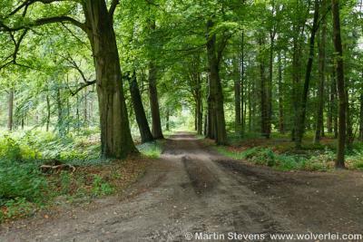 Diepenheim, prachtige bossen rond de stad