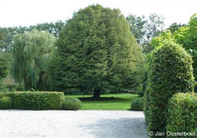 Geulle aan de Maas, binnentuin voorburcht Kasteel Geulle