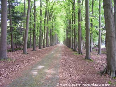 Gilze, een van de monumentale en prijswinnende (zie bij Landschap, natuur en recreatie) lanen op Landgoed Valkenberg