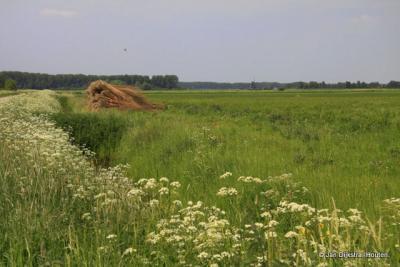 Blik over de polder bij Hellouw.