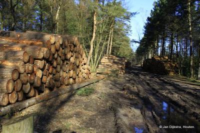 Bosbouw bij Hollandsche Rading, ze noemen het daarom ook wel 'het dorp in het bos'