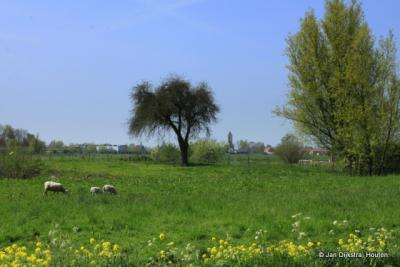 In de verte zien we Hoornaar in het landschap van de Alblasserwaard.