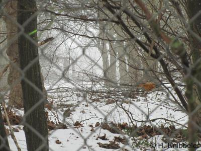 Kerensheide, als je door de hekken van DSM ter hoogte van dit voormalige dorpje kijkt, kun je de bomenrijen van de voormalige woonstraten nog zien staan...