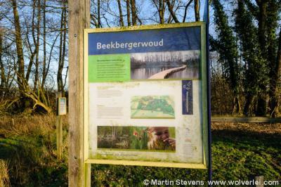 Beekbergerwoud van Natuurmonumenten, Klarenbeek, gem. Apeldoorn. De zeldzame blauwborst broedt hier.