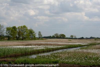 Meije, op het blauwgraslandcomplex van 12 hectare floreert zeldzame flora