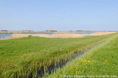 Midden-Eierland onder De Cocksdorp is een heel kleine buurtschap met een heel groot buitengebied met veel groen, water, rust en ruimte.