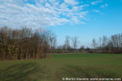 Abshoven, Munstergeleen, Zuid Limburg, zicht op het Absbroekbos van Natuurmonumenten