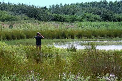 Natuurgebied Nieuw-Wulven, niet ver van Oud-Wulven.