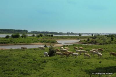 Buitendijks bij Passewaaij, puur natuur