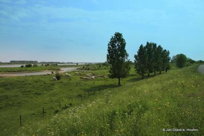 Ruimte voor de rivier én voor de natuur bij Passewaaij