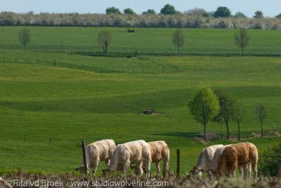 Schey, uitzicht vanaf deze buurtschap over koetjes en boomgaard aan de horizon
