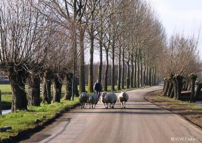 Reijerscop, een idyllische buurtschap onder Harmelen. Laten we hopen dat dit landschap zo gehandhaafd blijft en de snode plannen voor een bedrijventerrein hier geen doorgang vinden...