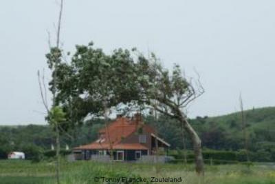 Snabbeldorp, huis met kromgegroeide boom (2008)