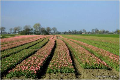Het landschap bij Spanbroek in het voorjaar