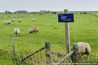 Spang, De Waal, Texel, Noord Holland