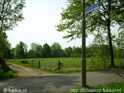 Terheijl (buurtschap van Nietap), Schapenweg.