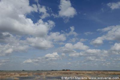 Tiengemeten, voormalig landbouweiland tegenwoordig natuureiland, ligt midden in het Haringvliet. Zie hoofdstuk Natuur en recreatie.