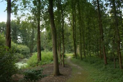 Het Veenkloosterbos. Foto Jan Dijkstra.