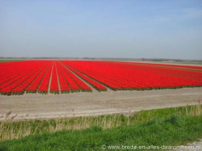 Zuidzijde, in het voorjaar staan hier de bloembollenvelden in bloei, wat dit soort fraaie uitzichten en plaatjes oplevert.