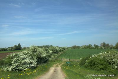 Het natuurgebied de Achthovense Uiterwaarden in het voorjaar met bloeiende meidoornhagen, het giebied is voor een groot deel in beheer bij Het Zuid-Hollands Landschap.