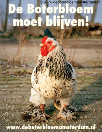 Ook de nu nog deels maagdelijke Lutkemeerpolder in Oud Osdorp moet wijken voor bedrijventerreinen. Ook ecologische zorgboerderij De Boterbloem moet daarvoor wijken. Velen hebben vele jaren geijverd voor behoud van deze oase, maar het mocht niet baten...