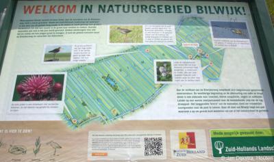 Op onze pagina van Bilwijk kun je alles lezen over de bijzonderheden van de 270 hectare die hier de afgelopen jaren is aangelegd. Ook een informatiepaneel ter plekke vertelt je er in tekst en beeld over.