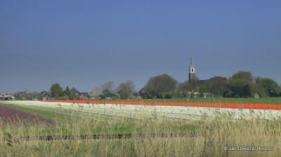 Bij het kerkje van Binnenwijzend kijken we over het spoor en de bollenvelden naar de kerk van en het dorp Westwoud.
