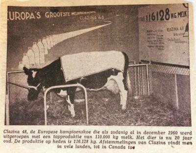 Het ieniemienie dorp Binnenwijzend (nóóit van gehoord) wordt in december 1960 op slag wereldberoemd wegens de huldiging van Clazina 48 als Europese kampioenskoe, met tot dan 110.000 kg geproduceerde melk. Uiteindelijk zou ze zelfs ruim 121.000 kg halen.