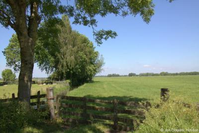Ook de bomenrijen tussen de weilanden in buurtschap Bovenkerk komen de natuur en het landschap ten goede.