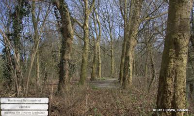 In buurtschap Breudijk kun je een mooie wandeling maken door het Vijverbos