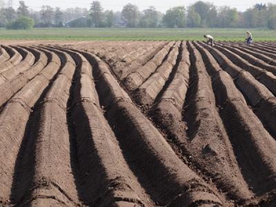 Doezum, mei 2017, de aardappelvelden worden weer gereedgemaakt voor het nieuwe seizoen (© Harry Perton/https://groninganus.wordpress.com)