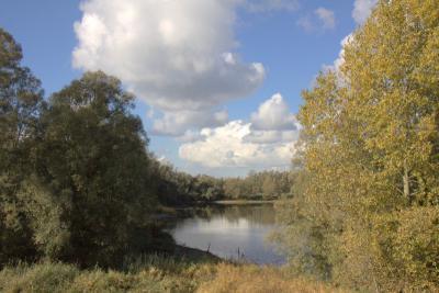 De Dreumelse Waard tussen de Waaldijk en de rivier de Waal is een mooi uiterwaarden- en natuurgebied. In het hoofdstuk Landschap etc. kun je er meer over lezen. (© Jan Dijkstra, Houten)