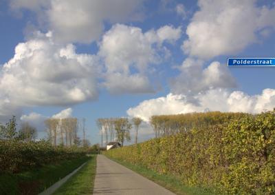 Vanaf de Hogeweg loopt de Polderweg naar de Waaldijk, tussen de boomgaarden door, waar ze er veel van hebben in Dreumel. (© Jan Dijkstra, Houten)