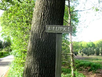 Bordje 't Lupke, foto van mei 2013, gemaakt binnen de bebouwde kom van Drunen. Volgens een lokale ingewijde is dit lokaal dialect voor (water)loopje. Heeft deze naam inderdaad betrekking op een watertje? Op het internet kunnen wij er niets over vinden.