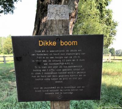 De 'Dikke Boom' op Landgoed Verwolde bij Exel is niet alleen heel dik, hij is ook heel oud; de leeftijd van de boom wordt geschat op tussen de 450 en de 500 jaar. Op dit informatiepaneel kan de voorbijganger lezen over de bijzonderheden van deze boom.