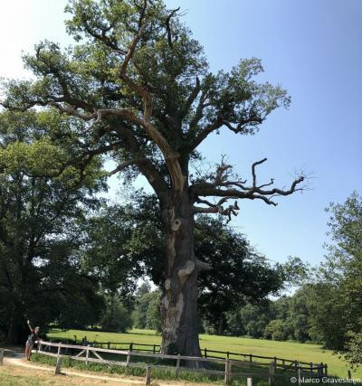Landgoed Verwolde, vallend onder het dorpsgebied van het dorp Exel, is naast het gelijknamige Huis ook bekend vanwege de beroemde 'Dikke Boom'. Deze boom is met een omtrek van 7,60 meter waarschijnlijk de dikste eik van Nederland.