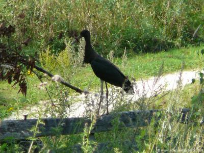 En ook natuurliefhebbers kunnen zich uitleven in Glanerbrug. Zo kun je de Groene Wissel Glanerbrug (16 km) lopen en in de Ecozone Glanerbrug kun je bijzondere dieren tegenkomen, zoals hier, in september 2012, de zwarte ooievaar.