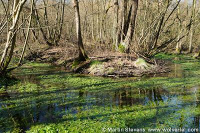 Guttecoven, natuurgebied Grasbroek