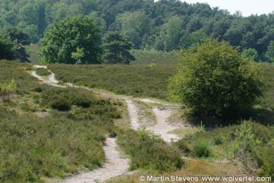 De Brunssummerheide ligt gedeeltelijk op grondgebied van de gemeente Brunssum, gedeeltelijk op Heerlens grondgebied.